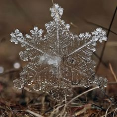 Andrew Osokin's macro photographs of snowflakes and ice formations ...