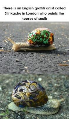 Snail Art; These snails are all pimped out! :) Some may not agree with him painting the snails' shells but I loveit!