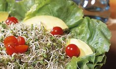 Salada de brotos e abacate