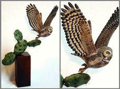 Elf Owl Tupulo wood carving - Picture 2 in 3D media: Tim McEachern -