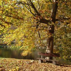 'Autumn rest ' on Picfair.com