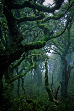 Dark green enchanted forest