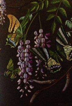 How to Paint Exotic Butterflies and Moths by Ralph S. Coventry. Teinopalpus imperialis from Nepal, Assam, upper Burma etc