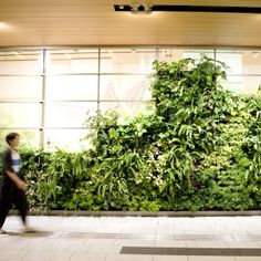 The green-wall of an underground passage