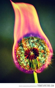 All I can think is REALLY. Yeah it looks cool right before it sets the yard on fire. Pinner said: Set a dandelion on fire. Looks so cool! Bucket list for this summer! Street Photography, Art Photography, Photography Articles, Photography Lighting, Photography Business, Motion Photography, Photography Lessons, Photography Awards, Wedding Photography