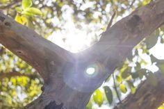 A través de un árbol.