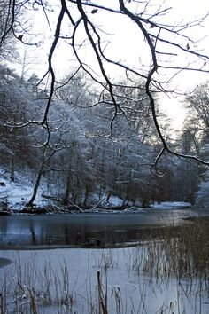 © crucifix marielle #winter#snow#parcsolvay#forêtdesoignes#white#frost