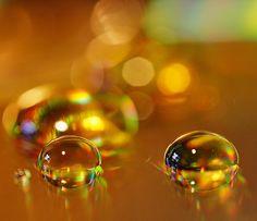 Honey | Flickr: Intercambio de fotos
