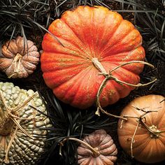 Heirloom pumpkin varieties.