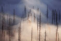 "Strolling Through Czech Republic's Gorgeous ""Cloud Forest"" - My Modern Metropolis by Kilian Schönberger"