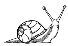 Snail Drawings - AZ Coloring Pages Snail Image, Snail Tattoo, Shell Drawing, Snail Art, Snail Shell, Mushroom Art, Desenho Tattoo, Line Drawing, Animal Drawings