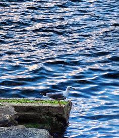 Oggi il mio stormo è andato via e no non so se tornerà   #igersreggiocalabria #reggiocalabria #igerscalabria #calabria #communityfirst #browsingitaly #whatitalyis #huntgram #huntgramitaly #bestreggiocalabriapics #bestcalabriapics #volgoreggiocalabria #volgocalabria #verso_sud #volgoitalia #vivo_italia #tv_living #tv_lifestyle #vsco #vscophoto #vscocam #mare #sea #seaporn #chianalea #gabbiano #seagull