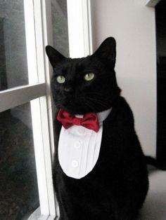 Cat tuxedo.  Your move.