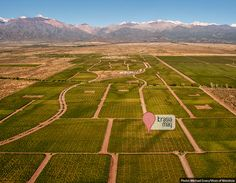 Krasia May || Our Land in Argentina || Credit: Michael Evans Wines, Evans, Vineyard, Outdoor, Argentina, Outdoors, Vine Yard, Vineyard Vines, Outdoor Games