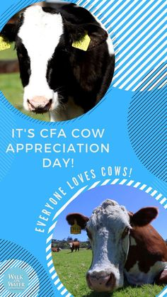 Yes, you want to get to Chick-fil-a today! Cow Appreciation Day, Walk On Water, Days Of The Year, Special Day, Chicken, Animals, Animales, Animaux, Animal