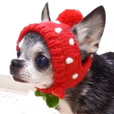 skipdog(チワワ専門店スキップドッグ!)-Goodies from Japan Crochet Dog Clothes, Girl Dog Clothes, Crochet Dog Sweater, Dog Clothes Patterns, Dog Pattern, Dog Sweater Pattern, Cat Sweaters, Dog Items, Girl And Dog