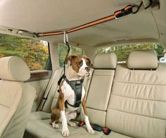 Pet Safety Harness