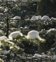 #Gifs #Nature #NatureGif