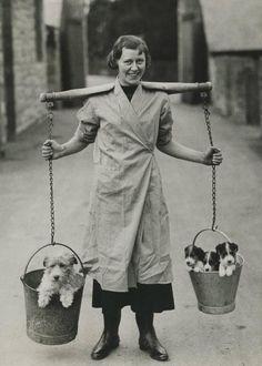 #vintage #dog #photography