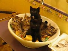 Kitties Nodding In A Basin! | The Animal Rescue Site Blog