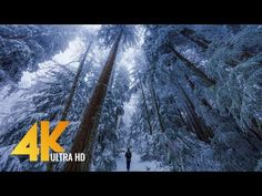 Walking in a Snow Forest UHD with Piano Music - Squak Mountain Fireplace Trail, WA Virtual Museum Tours, Virtual Tour, Relaxing Gif, Snow Forest, Virtual Field Trips, Virtual Travel, Piano Music, Music Music, 4k Uhd