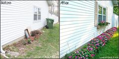 A row of impatiens along the house on a shaded side yard provides a burst of color