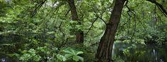 Promoción del Arte: Tiergarten - Romanticismo - primavera 2
