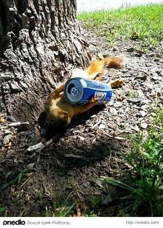 home now drunk squirrel Drunk Squirrel, Squirrel Girl, Secret Squirrel, Funny Animal Pictures, Funny Photos, Fluffy Animals, Cute Animals, Funny Times, Chipmunks