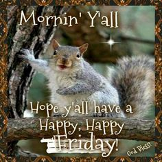 Pinned by sherry decket Squirrel Pictures, Animal Pictures, Cool Pictures, Cute Squirrel, Squirrels, Raccoons, Rodents, Good Morning Animals, Morning Quotes Images