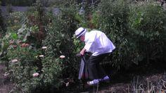 Grammy's Garden. Lenoir Retirement Community. Columbia, MO