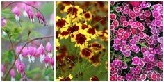 10 Best Perennial Flowers