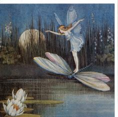 Ida Rentoul Outhwaite - fairy riding a dragonfly #MyMagnificentObsessions
