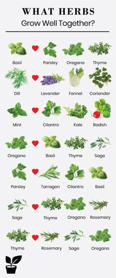 what herbs grow well together-companion planting Planting herbs together is a st. - - what herbs grow well together-companion planting Planting herbs together is a step toward a flowering garden. Growing herbs together can promote the h. Gardening For Beginners, Gardening Tips, Urban Gardening, Organic Gardening, Gardening Services, Allotment Gardening, Gardening Zones, Small Space Gardening, Herb Companion Planting