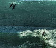 Reactivando motores! Dedícate un día para ti mismo te ayudará a dedicar el resto de días para los demás ------------------ Mí-Ma-Te-Te-Te ------------------ Fot.: SDoyle #california #encinitas #sandiego #eeuu #usa #surf #surfing #surfer #surfstyle #delfines #dolphins #agua #water #mar #sea #oceano #ocean #ola #wave #libertad #free #energia #energy  Y yo quiero ver cómo tú te mueves