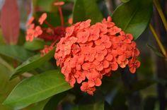 Flores em Saquarema - Projeto Eu Revivo a História , crédito www.casa3studio.com.br