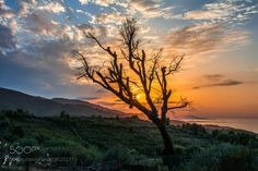 Sunset between trees by Boulham #Landscapes #Landscapephotography #Nature #Travel #photography #pictureoftheday #photooftheday #photooftheweek #trending #trendingnow #picoftheday #picoftheweek