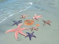beaches, shell, beach paintings, seas, color