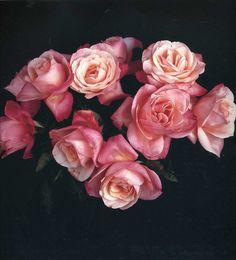 roses.  roses roses roses.
