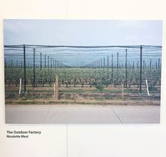 The outdoor factory was made by @nickywestphotos Peak Farm has modernised production over recent years utilising high tech methods to maximise yields and efficiency. The project explores comparisons with the other industrialised environments seeking to portray the factory-like surrounding of the modern farming landscape. Clean lines regimented uniformity and efficiency dominate the image. At the same time the essence of nature remains in the blossoms we see adorning the trees. via Hashtag…