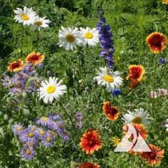Mountain Wildflower seed mix by Outsidepride