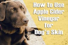Dog's skin can become sensitive and itchy due to various skin problems. Apple cider Vinegar is a common home remedy for relieving dog skin problems.
