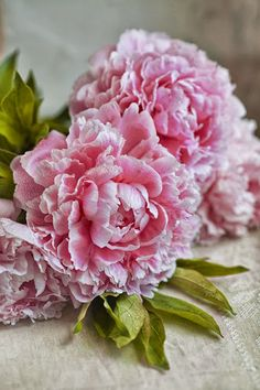 #peonies #flowers Get wowed with an amazing bouquet: http://www.bloomsybox.com/