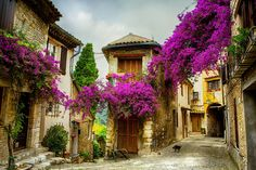 Traumhafte Provence Erstklassige Sprachlehrer Geheimtipp für Sprachreisen #provence #Provence #Sprachlehrer #Sprachlehrer #Geheimtipp #Lavendel