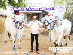 Proud to be Owner of Ongole Bull.