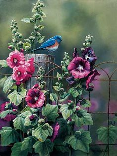 Bluebird and Hollyhocks by Susan Bourdet  |  Wild Wings