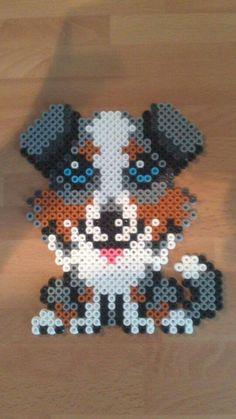 Cachorro ojos azules
