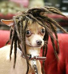 I'm a huge Bob Marley fan #hair #dog