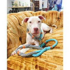 Customize your own rope collar & leash set!