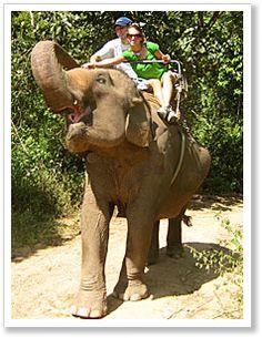 Thailand travel - Elephant treks