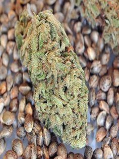 We Sell High Quality Grade AAA+++++ Cannabis seeds at affordable prices contact the whatsApp number below for more details. Weed Seed Bank, Medical Marijuana, Cannabis, Buy Seeds Online, Weed Strains, Weed Seeds, Buy Weed, Buy Cheap, Monkey